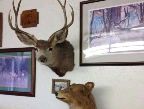 Modesto Barber shop, stuffed deer headp